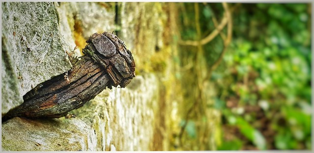 Ancient rusty bolt in the kitchen garden wall.