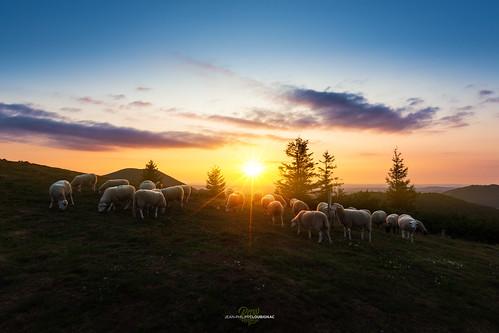 axel loane ateepicture chainedespuys pariou rando rawvergnat sunset volcan ateepic loubi loubignac arverne auvergnerhonealpes auvergne sheep mouton troupeau pastoralisme