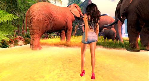 Where is my Tarzan?2