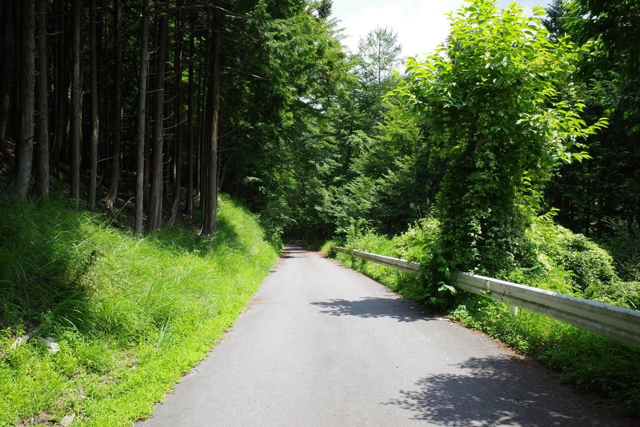 奈良田までの林道歩き