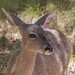 Cat Rayner posted a photo:White-tailed Deer