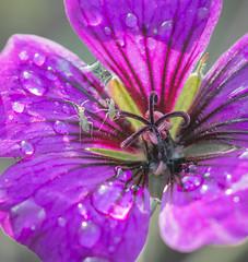 Wet Green Bug,s.
