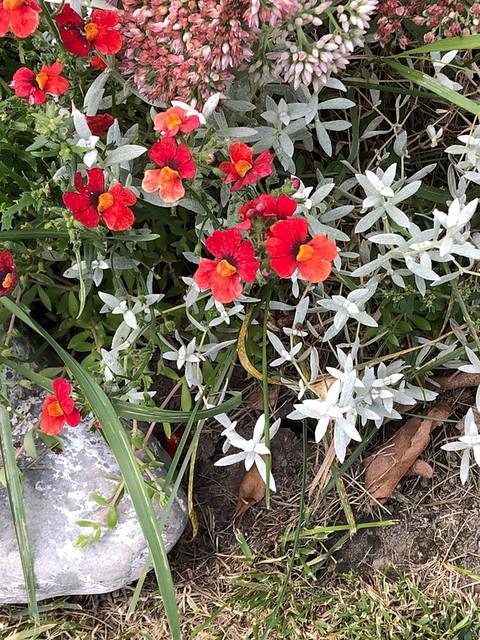 Daughter's Garden