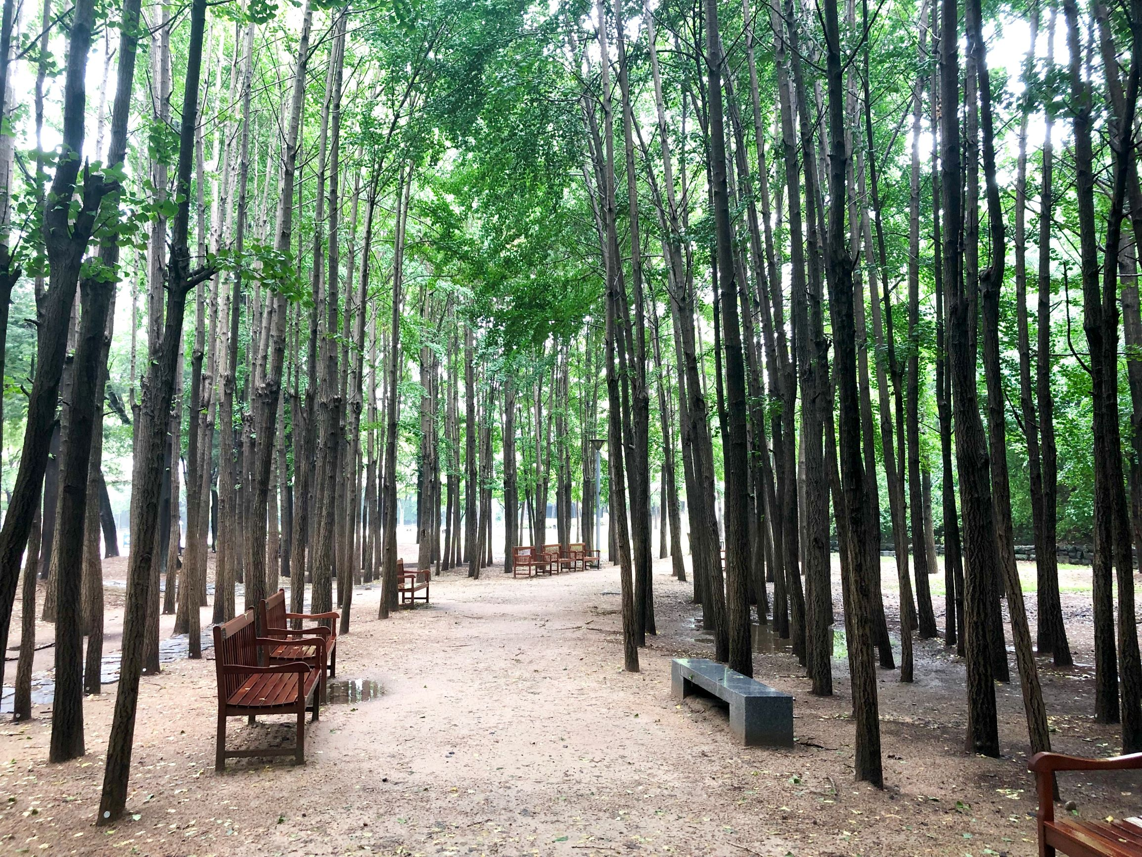 seoulforest5
