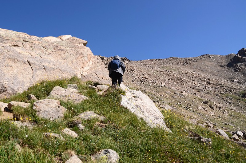 Mount Harvard Trail (the steep slope below Mt. Harvard's south ridge) (11)