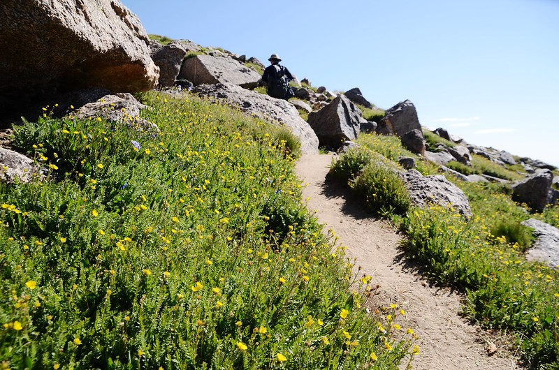 Mount Harvard Trail (the south ridge to the summit) (5)