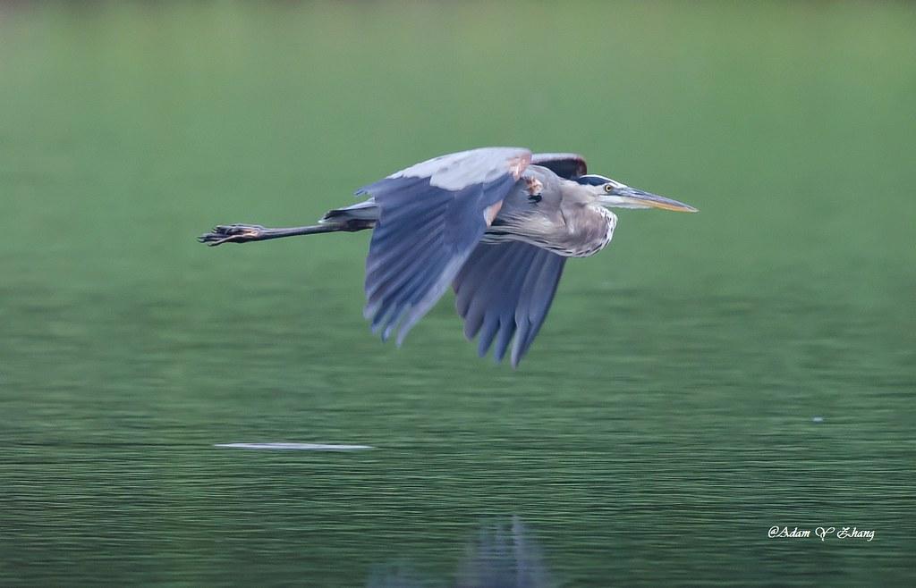 Calm Flight