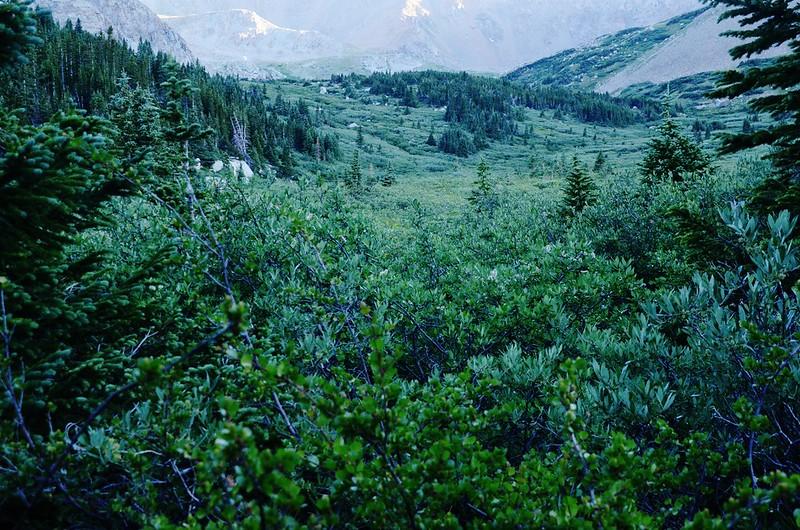Hiking trail through Horn Fork Basin (1)