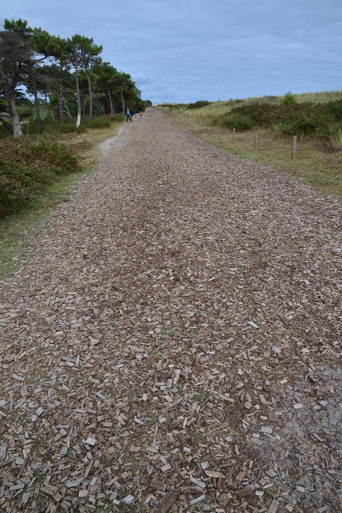 chemin de copeaux de bois sur la dune