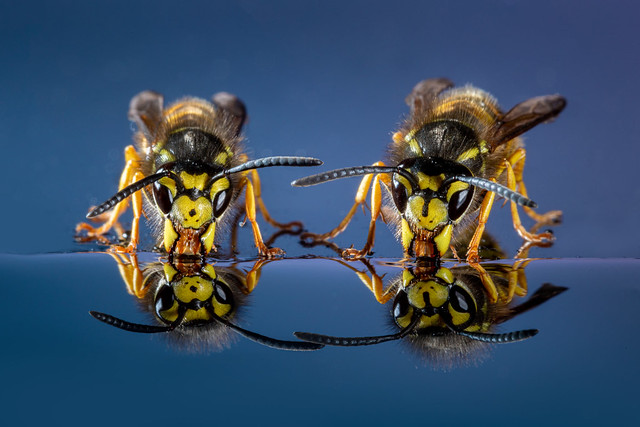 Wasps - a little close for comfort