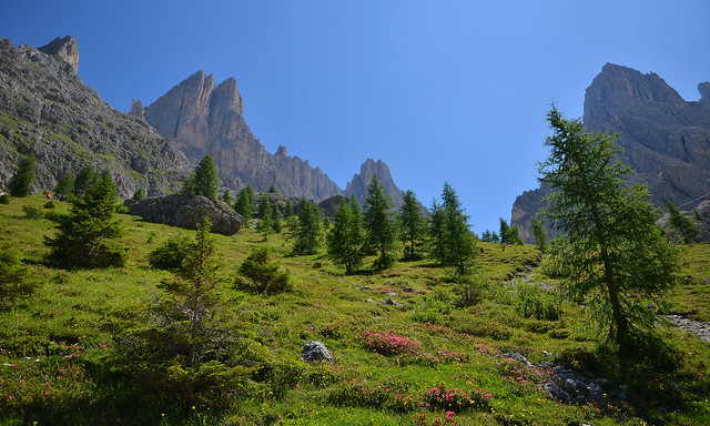 Enchanted apine meadow