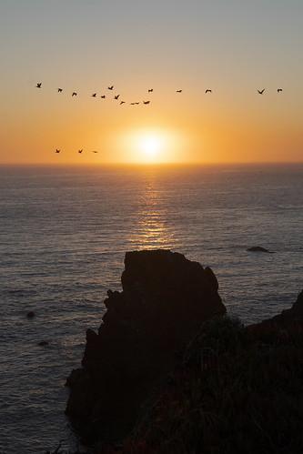 sunset marinheadlands ptbonita birds