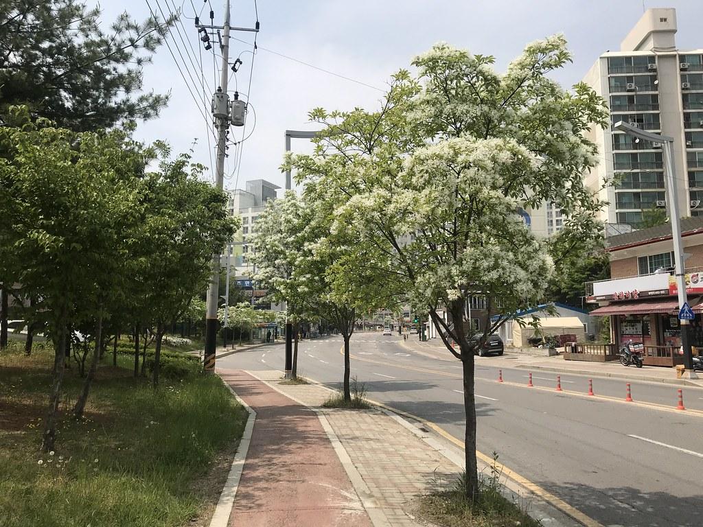 Eunhajang