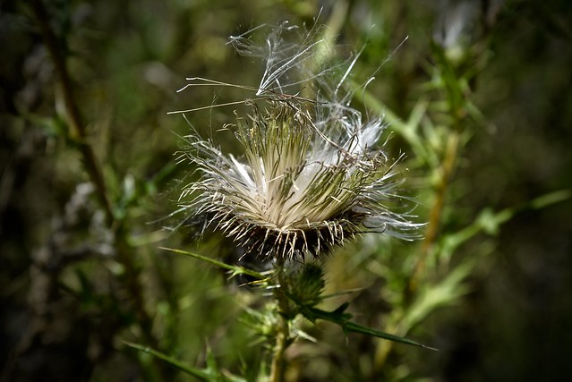 Blowin' in the Wind - LeRoy Oakes - Kane County Forest Preserve - Saint Charles IL