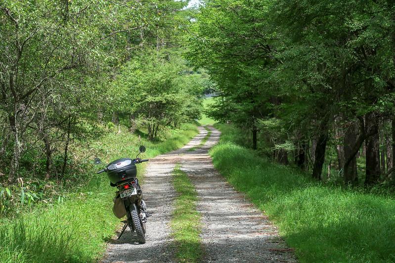 黒河内林道へ