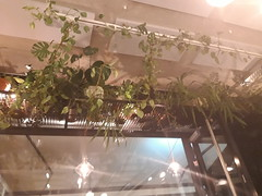 greenery at vito