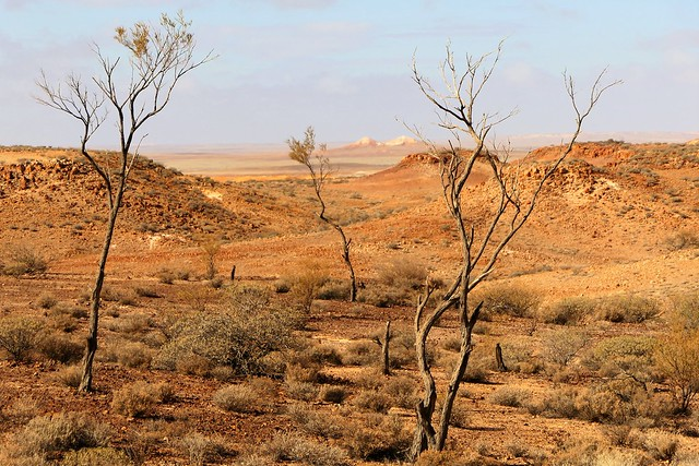 A Dry Year in the Desert, Breakaways via Coober Pedy, South Australia