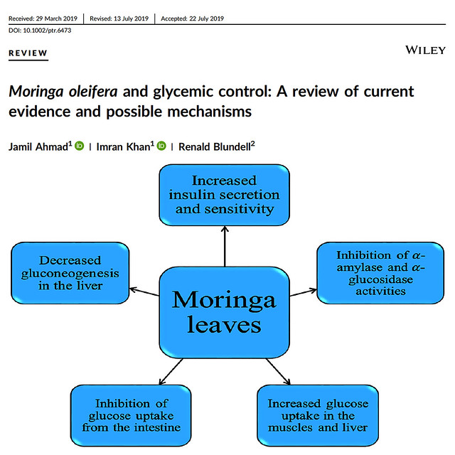 Moringa oleifera and glycemic control: A review of current evidence and possible mechanisms