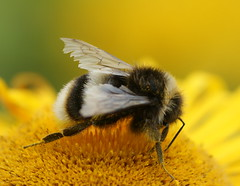 """The busy bee has no time for sorrow"". William Blake"