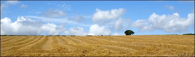 Out in the field... DSC05687