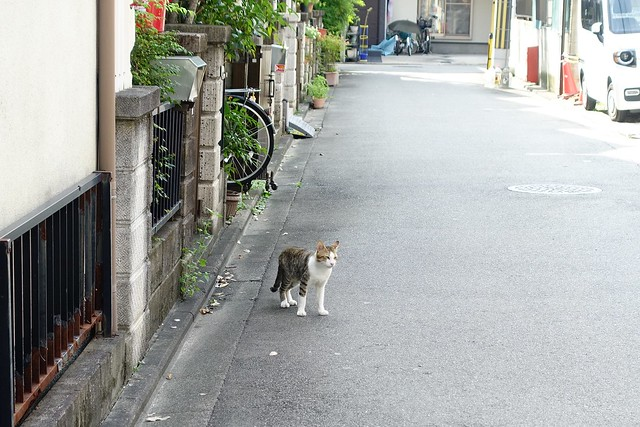 Today's Cat@2019-08-24