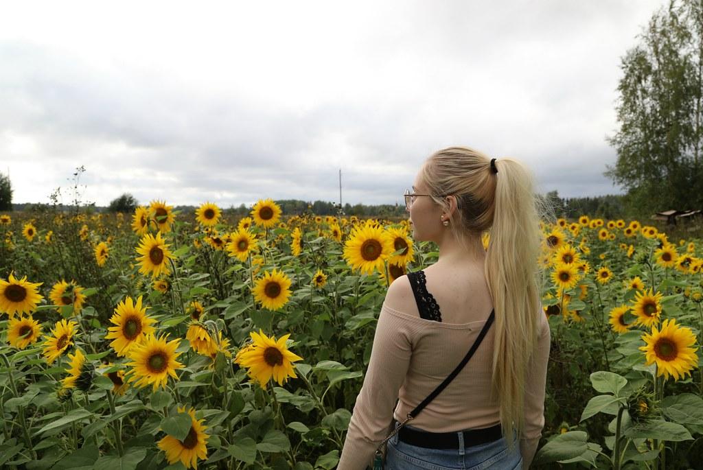 auringonkukkapelto3