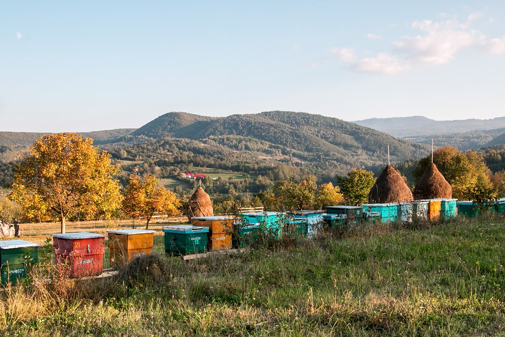 A line of bee hives standing in front of a green hill