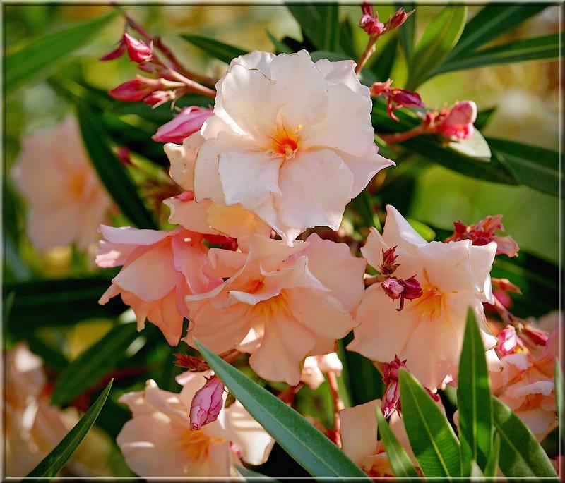 Au jardin des plantes. - Page 4 48610909942_97b41e6282_b