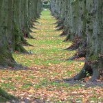 Tree tunnel at Halsam Park, Preston