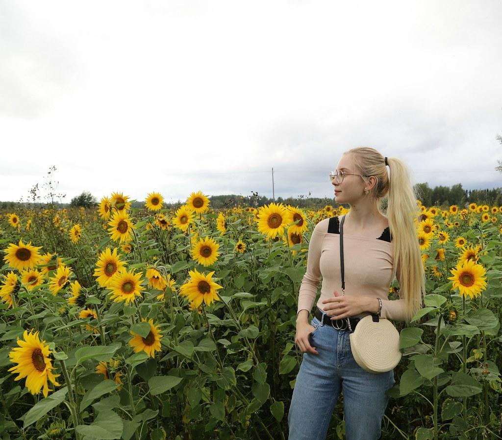 auringonkukkapelto2