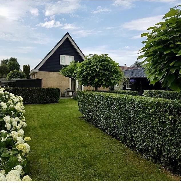 Landelijke lange groene tuin