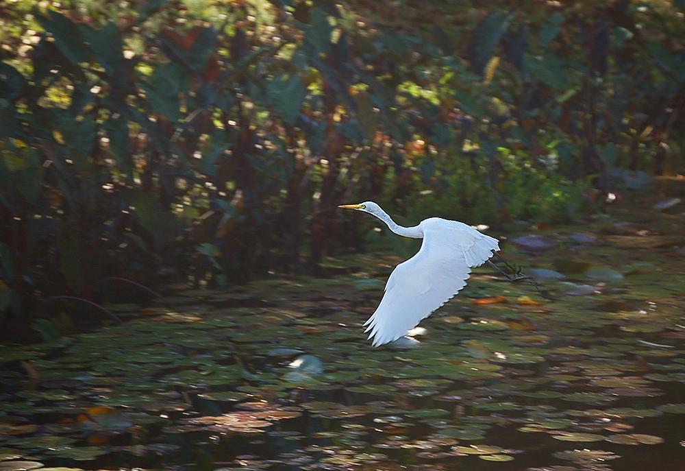 _egret_2_
