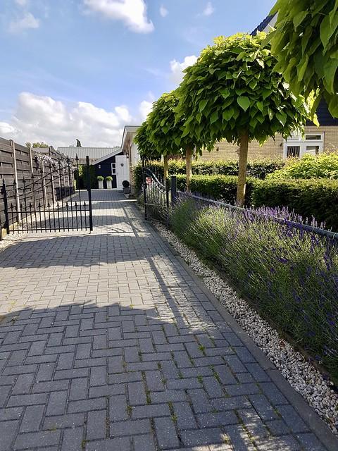 Lavendel langs oprit met tuinhek