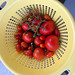 tomato_harvest-20190822-100