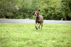 048 Running with one ear up