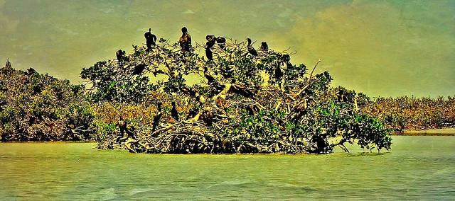 MEXICO, Yukatan, Am Golf von Mexiko,  Isla Aguada -Laguna Terminos, Vogelparadies, Alle Vögel sind schon da.. serie, 19227/11902