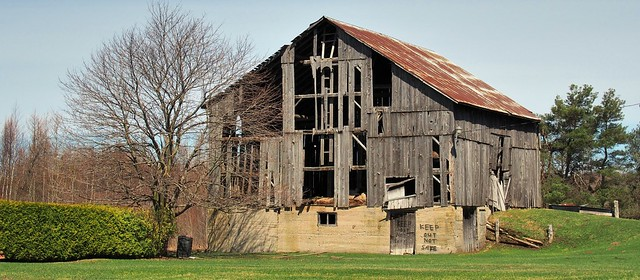 Not safe - collapsing abandoned 19thC wooden barn, Dufferin County, Ontario ..