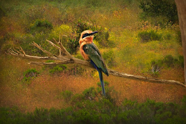 Annie's Canyon - Bee Eater