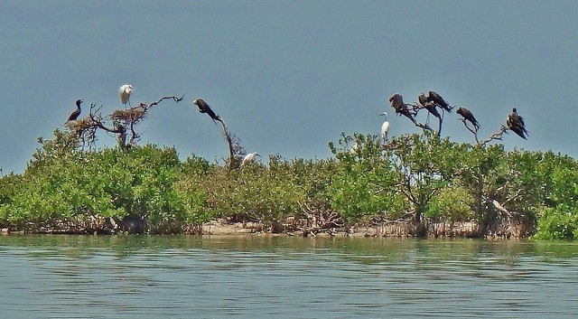 MEXICO, Yukatan, Am Golf von Mexiko,  Isla Aguada -Laguna Terminos, Vogelparadies, Alle Vögel sind schon da.. serie, 19229