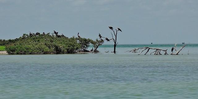 MEXICO, Yukatan, Am Golf von Mexiko,  Isla Aguada -Laguna Terminos, Vogelparadies, Alle Vögel sind schon da.. serie, 19231