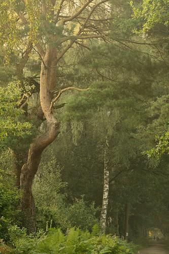 whitegate woods cheshire trees sunrise green