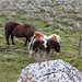 "<p><a href=""https://www.flickr.com/people/roederphoto/"">roeder.photo</a> posted a photo:</p>  <p><a href=""https://www.flickr.com/photos/roederphoto/48612879492/"" title=""Shetland Ponys""><img src=""https://live.staticflickr.com/65535/48612879492_9eb7e8a931_m.jpg"" width=""240"" height=""160"" alt=""Shetland Ponys"" /></a></p>"
