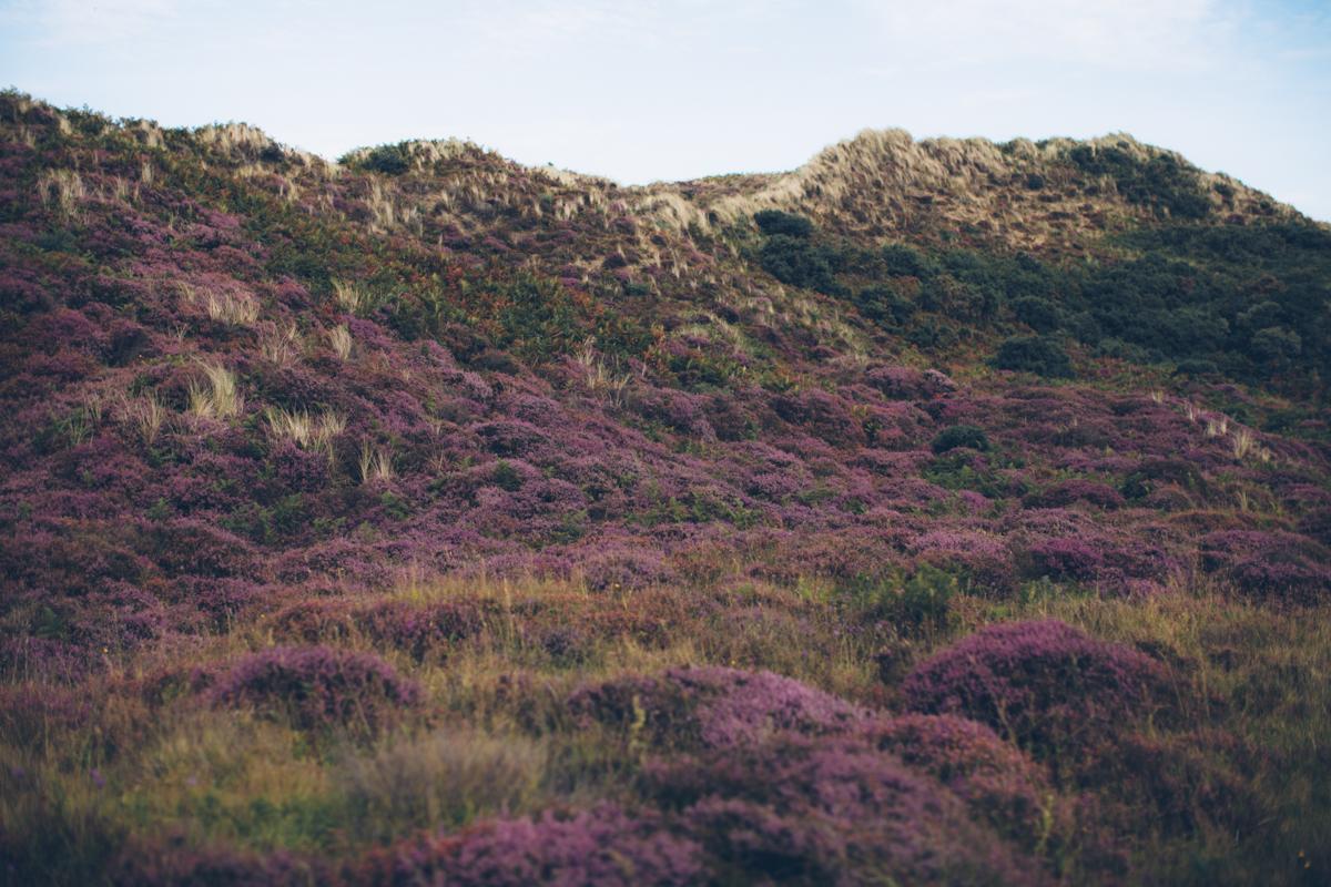 heatherhills-29