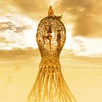 Burning Man Bacteria