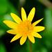 "<p><a href=""https://www.flickr.com/people/136903563@N03/"">Szymon Karkowski</a> posted a photo:</p>  <p><a href=""https://www.flickr.com/photos/136903563@N03/48613472226/"" title=""Yellow star""><img src=""https://live.staticflickr.com/65535/48613472226_2487e8699b_m.jpg"" width=""240"" height=""135"" alt=""Yellow star"" /></a></p>"