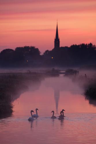stompwijk zuidholland netherlands polder swan sunrise mist dutch holland nederland church tower village rural morning