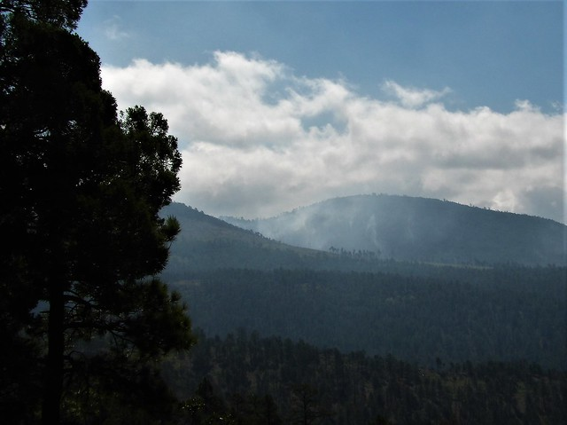 81419-075, Forest Service Controlled Burn