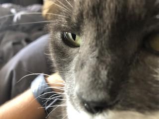 Crick's eye
