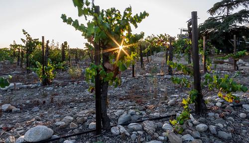 vineyard ranchocucamonga sunstar