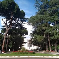 #Buongiorno Sapienza e #buonadomenica con una foto del viale principale di @__trilli